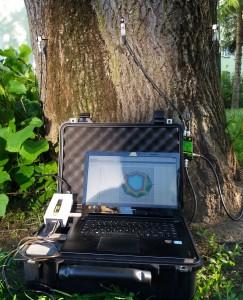 Analiza zdrowotności pnia drzewa przy użyciu ARBORSONIC 3D