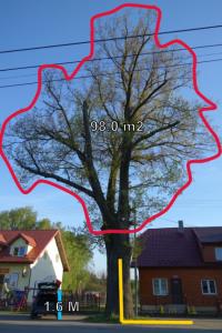 Analiza metryczna drzewa jako element oceny biomechanicznej wytrzymałości drzewa na złamanie